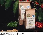 出荷されるコーヒー豆